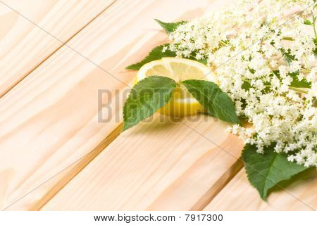 Healthy Elder Flower