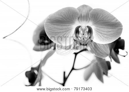 Orchid Four
