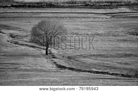 Bw Landscape With Tree In Meadows