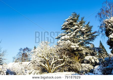 Snow Covered Trees In Nature