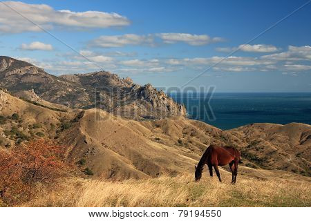 Wild Horse On The Sea Landscape