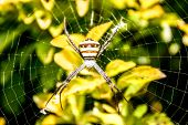 pic of cobweb  - spider cobweb gossamer leaves animal nature wildlife - JPG