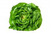 picture of butter-lettuce  - Green Butter Lettuce isolated on white background - JPG