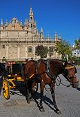 stock photo of carriage horse  - Cathedral of Saint Mary of the See  - JPG