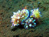 foto of slug  - The surprising underwater world of the Bali basin - JPG