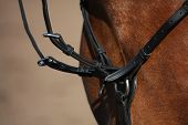 foto of breastplate  - Close up of martingale on brown horse in summer - JPG