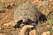 picture of gad  - Turtle on the rocky and sandy desert - JPG