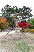 picture of seoul south korea  - The tree in autumn inside of Gyeongbokgung Palace in Seoul South Korea - JPG