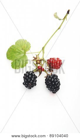 Blackberries on white background - studio shot