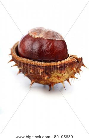 Chestnut on white background - studio shot