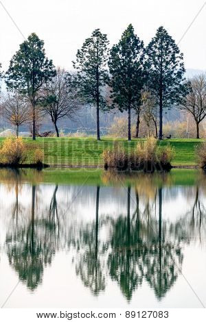 trees reflecting in the lake, symbol of nature, idyllic, contemplation