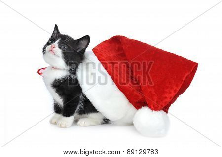 Cute Kitten With Santas Hat
