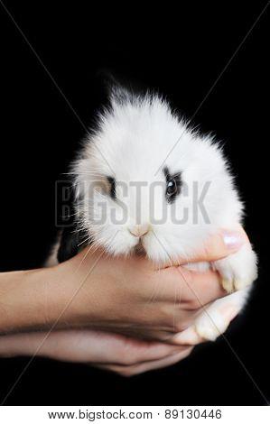 White Rabbit In Hands