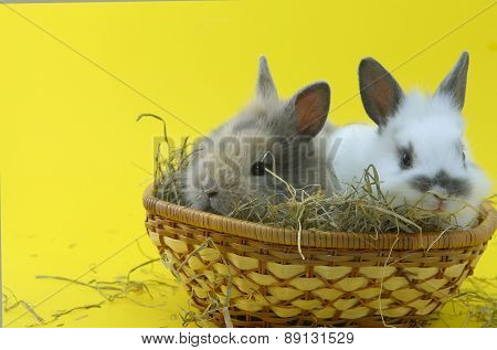 Small Rabbits In Basket