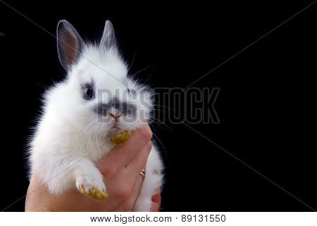 Hadns Holding Small Rabbit