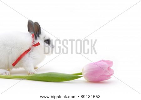 Small Rabbit And Flower