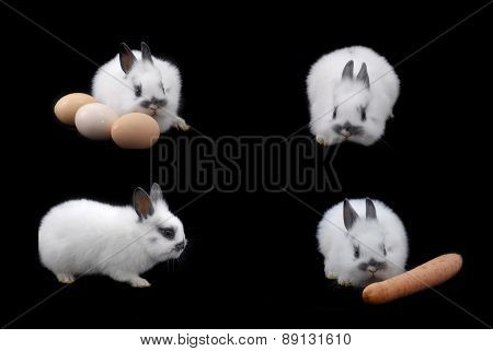 Small Rabbit And Eggs