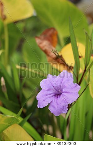 Purple Flower In A Nature At The Garden.