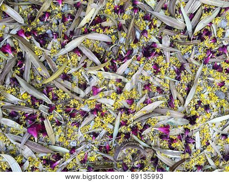 Background, Colorful Sprig Mess