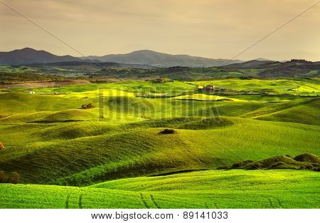 Tuscany Spring, Rolling Hills On Sunset. Volterra Rural Landscape. Green Fields And Farmland. Italy
