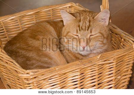 Orange tabby cat happily sleeping in a wicker basket