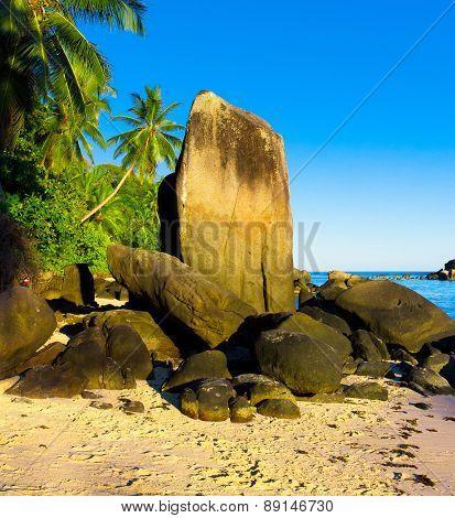 Beach Stones Coconut