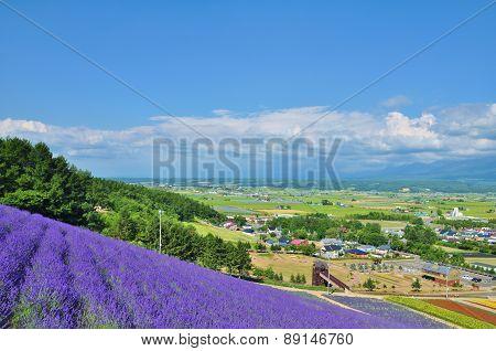 Beautiful flower field on the hill