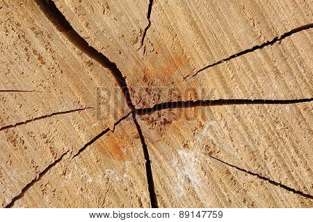 Wood cutted trunk texture