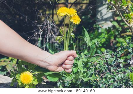 Hand Pulling Weeds