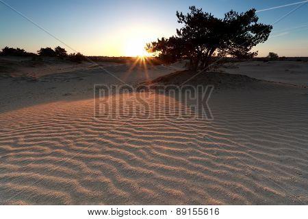 Sunrise Over Sand Dune And Pine Tree