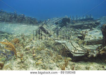 Wreck Ecosystem