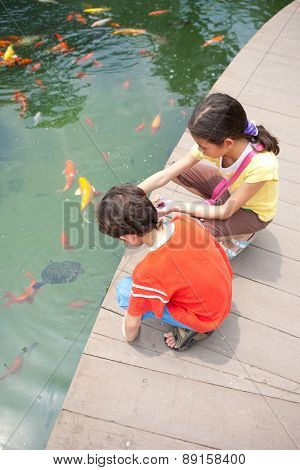 Young boy with sister feeding ornamental koi carp fish in a pond.