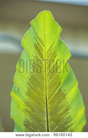 Green Leaf Texture For Background