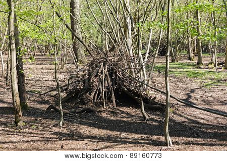 Wigwam In Forest