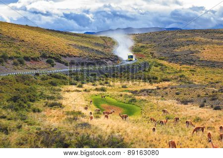 On a dirt road bus rides in a cloud of dust. On the grass grazing herd of wild guanacos.  National Park Torres del Paine in Chilean Patagonia