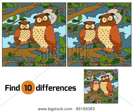 Find Differences (owl)