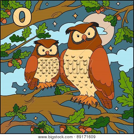 Color Alphabet For Children: Letter O (owl)