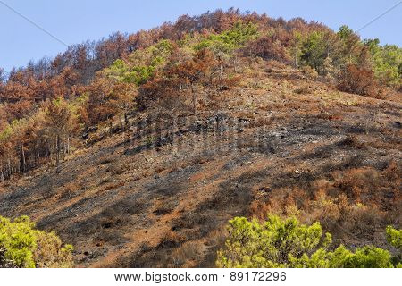 natural disaster forest fires