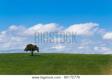 meadow, grass land with tree, blue sky, screen saver computer