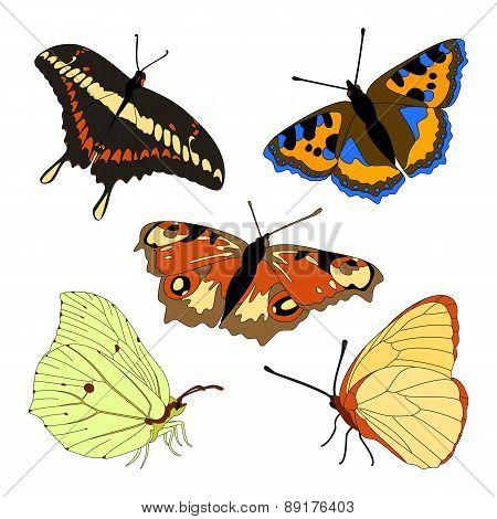 Vector Set Of Butterflies.