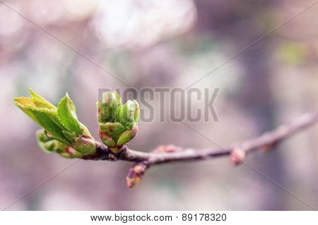 First spring leaves on a twig in park, shallow depth of field