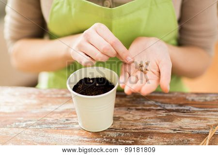 people, gardening, seeding and profession concept - close up of woman hands with paper bag and trowel sowing seeds to soil in pot