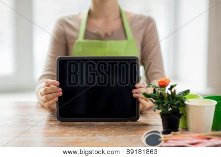 people, gardening, flowers and profession concept - close up of woman or gardener showing tablet pc computer black blank screen at home