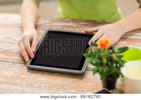 people, gardening, flowers and profession concept - close up of woman or gardener with tablet pc computer black blank screen at home