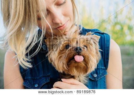 Pretty Yorkshir Terrier On The Girl's Knees