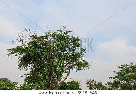Blue Sky And Tree