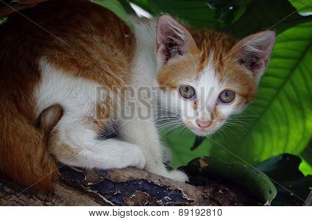 Yellow Street Cat