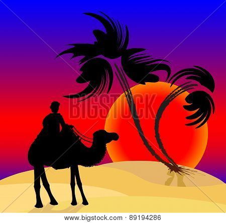 Silhouette of the cameleer in the desert at sunset. Vector illustration.