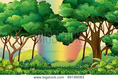Forest scene with a rainbow background