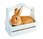 stock photo of crate  - Cute brown rabbit in color crate isolated on white - JPG